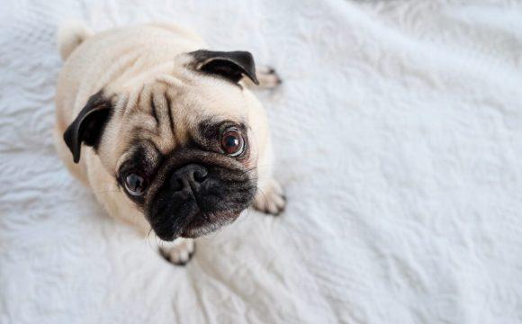 Best Dog Camera Treat Dispenser 2020 Review - Post Thumbnail
